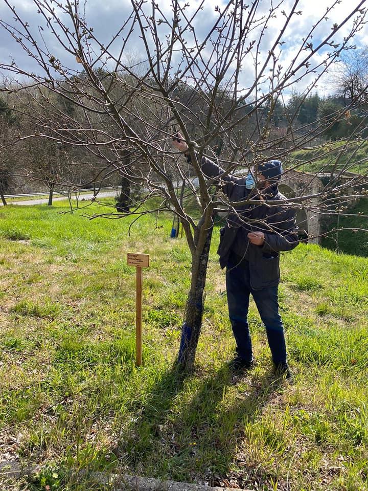 Città della Pieve – Festa dell'albero, gli studenti delle Medie donano un castagno